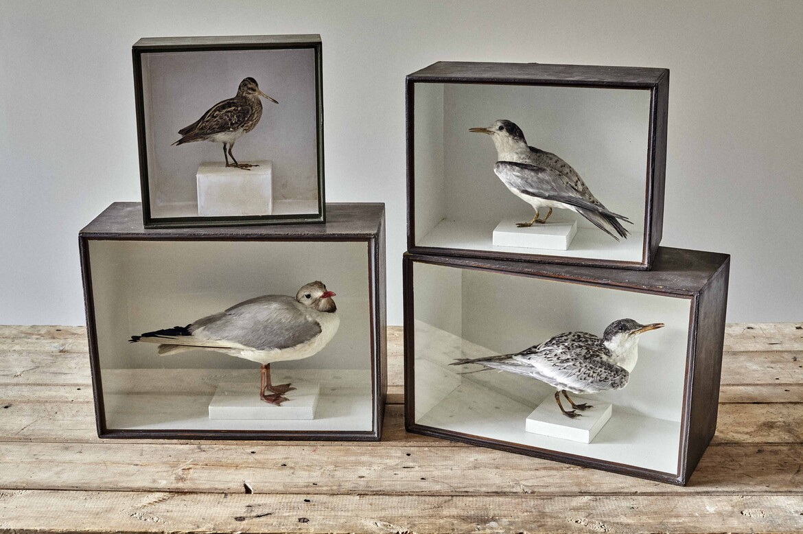 taxidermy selection